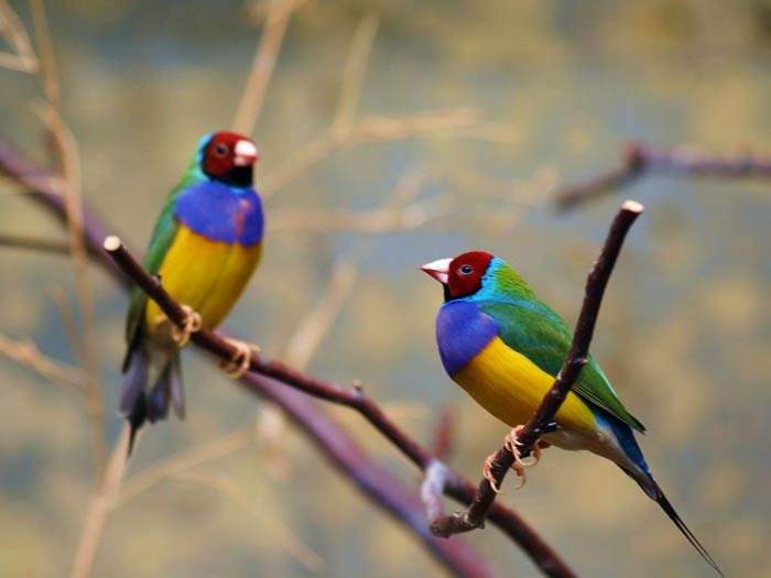 Shangrala's Colorful Birds 3