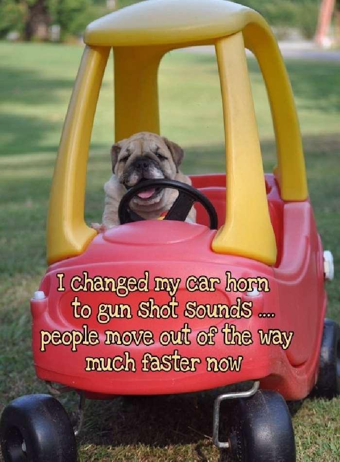 Shangrala's My Bulldog Life
