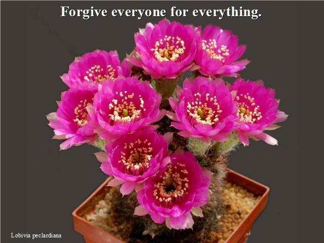 Shangrala's Beautiful Cactus Blooms