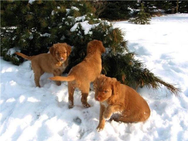 Shangrala's Cameo Dogs