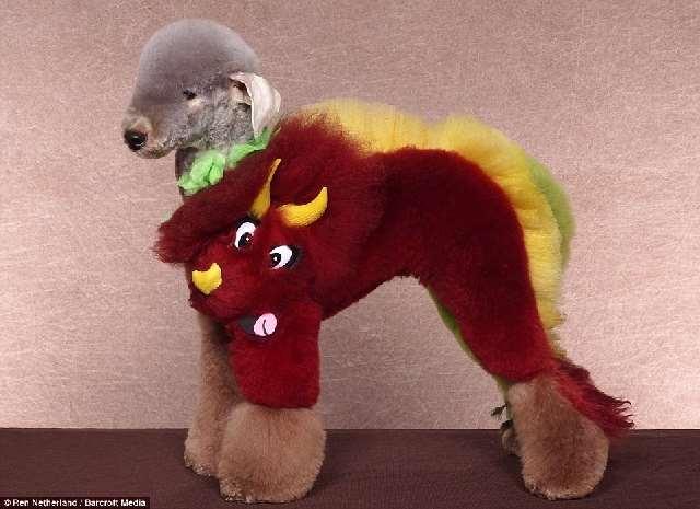 Shangrala's Extreme Dog Grooming