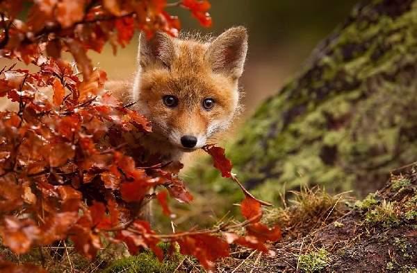Shangrala's Animals In Fall 2