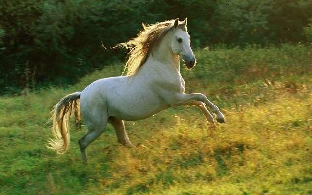 Shangrala's Running Horses