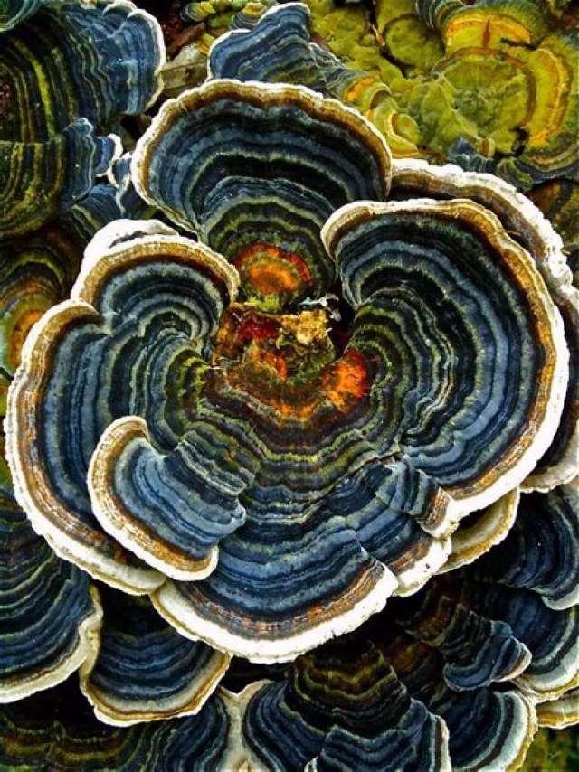 Shangrala's Most Beautiful Mushrooms