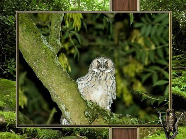 Shangrala's Owl Lovers