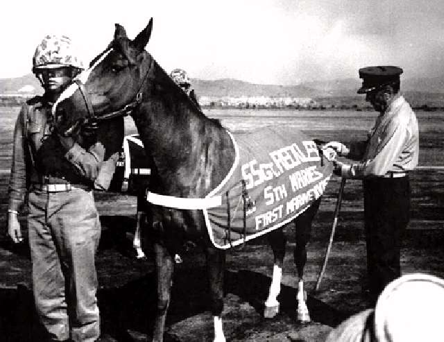 Shangrala's Sgt. Reckless