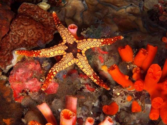 Shangrala's Beautiful Starfish