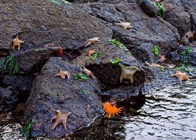 Shangrala's Beautiful Starfish