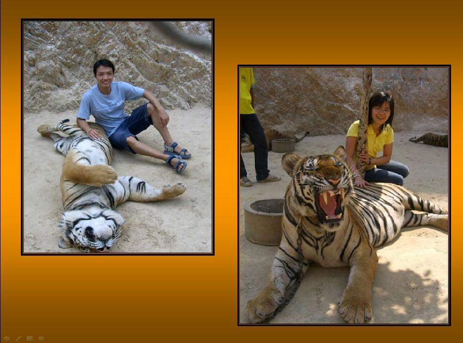 Shangrala's Thailand's Tigers 2