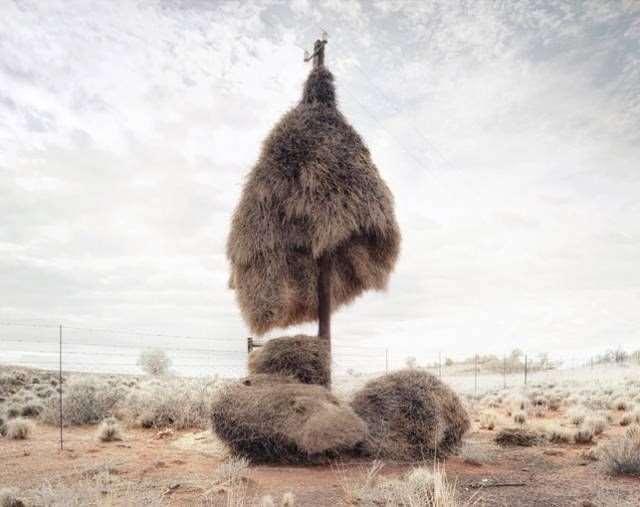 Shangrala's Sociable Weaver Birds