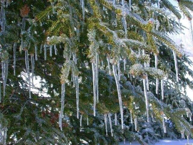 Shangrala's Winter Wildlife