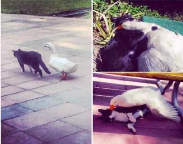 Shangrala's Animal Friends 5