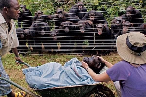 Shangrala's Newsworthy Animals 2