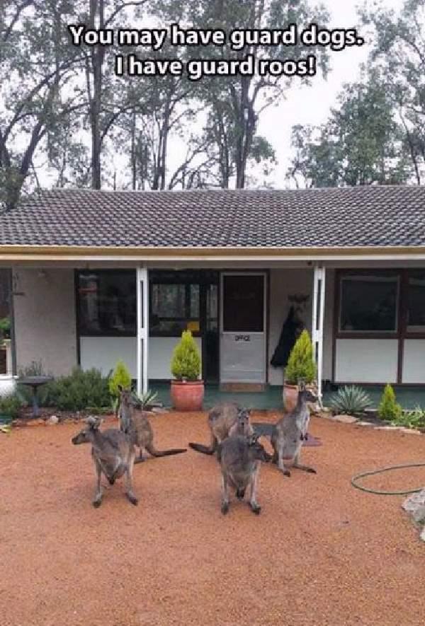 Shangrala's Only In Australia