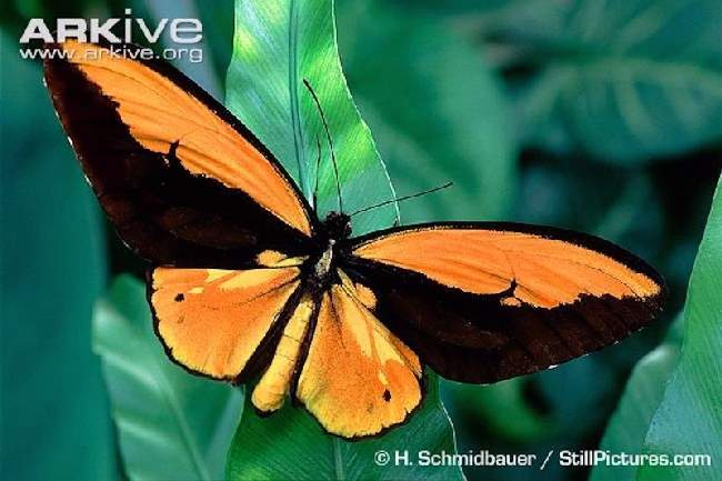 Shangrala's Beautiful Butterflies