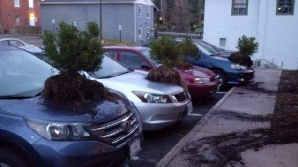 Humor With Cars