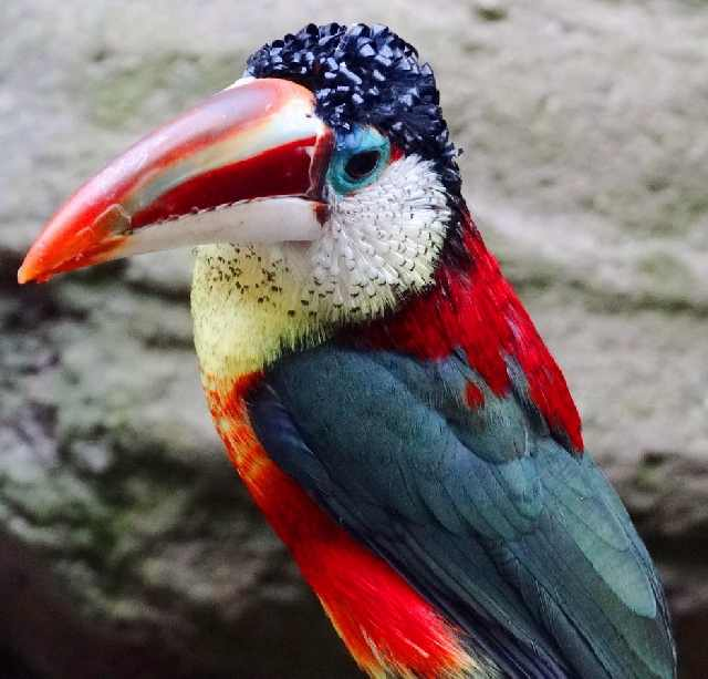 Shangrala's Beautiful Exoctic Birds