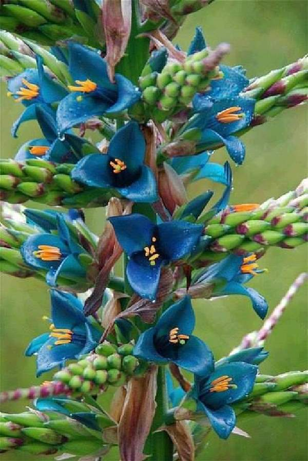 Shangrala's Beautiful Rare Flowers 2