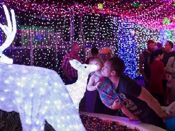 Shangrala's Record Christmas Lights