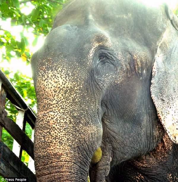 Shangrala's Elephant Rescue 2