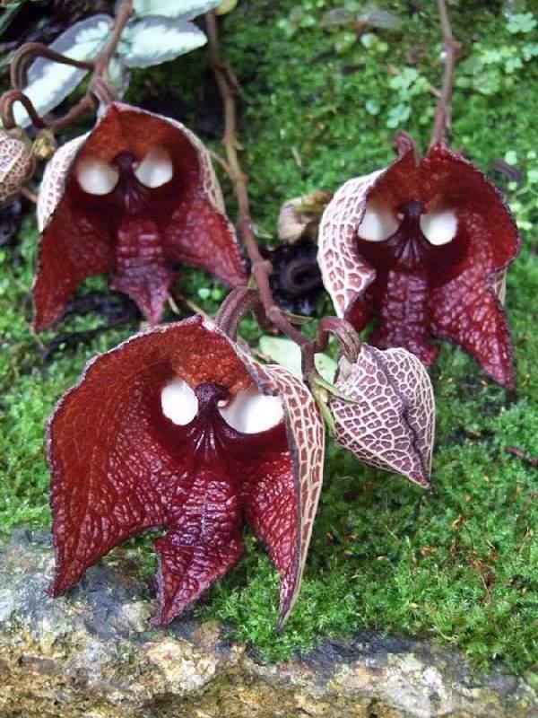 Shangrala's Beautiful Rare Flowers 3
