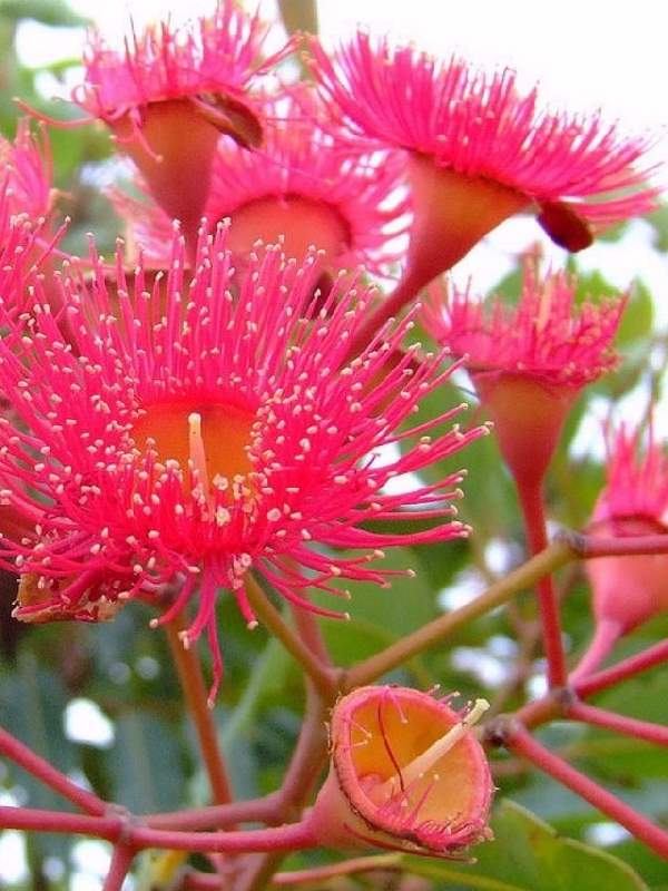 Shangrala's Beautiful Rare Flowers 4