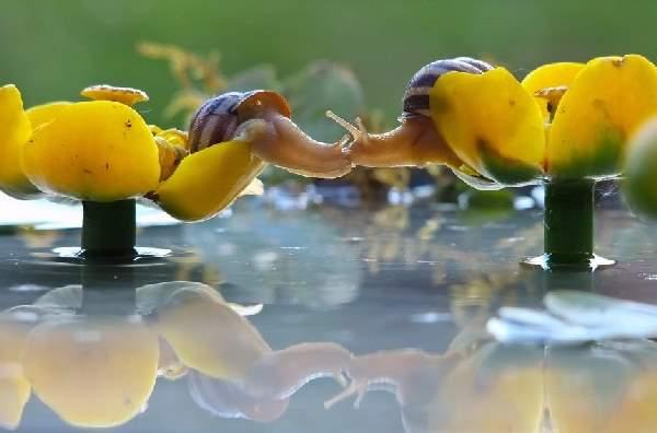 Shangrala's Magical Tiny Snails
