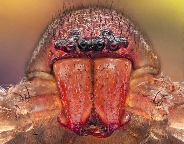 Shangrala's Macro Spider Photos