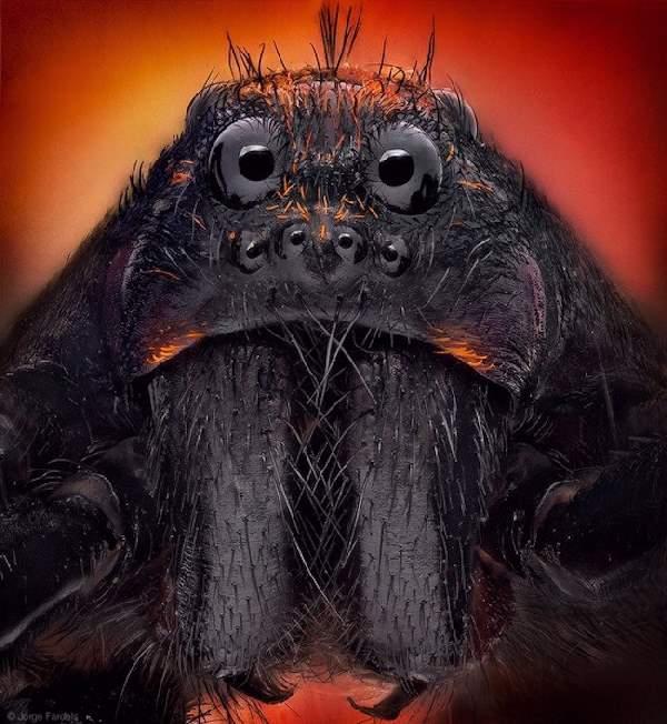 Shangrala's Macro Spider Photos