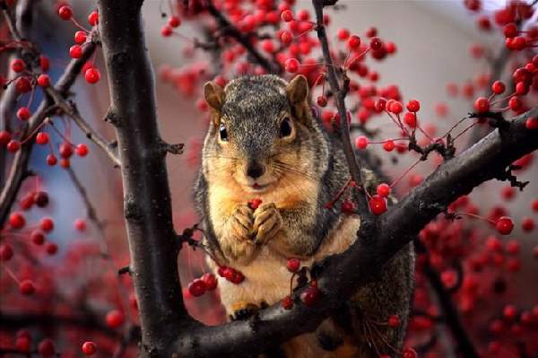 Shangrala's World Of Squirrels