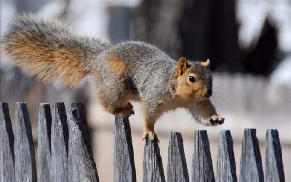 Shangrala's World Of Squirrels 2