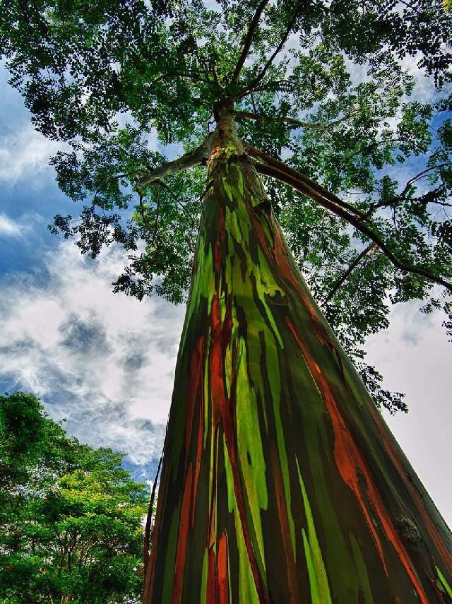 Shangrala's World's Beautiful Trees