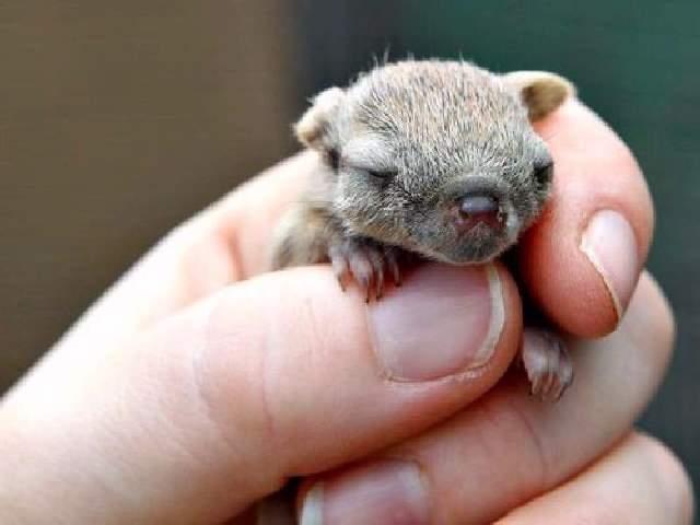 Shangrala's Cute Australian Wildlife