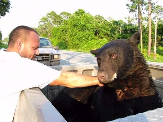 Shangrala's Bear Rescue 2