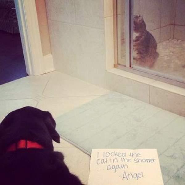Shangrala's Pet Confessions 2