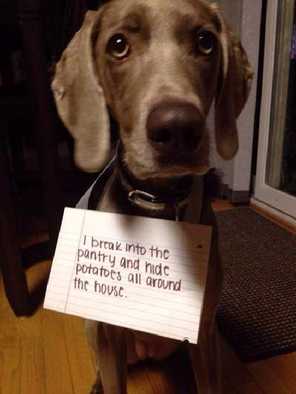 Shangrala's Pet Confessions