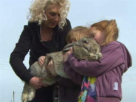 Shangrala's World's Largest Bunny