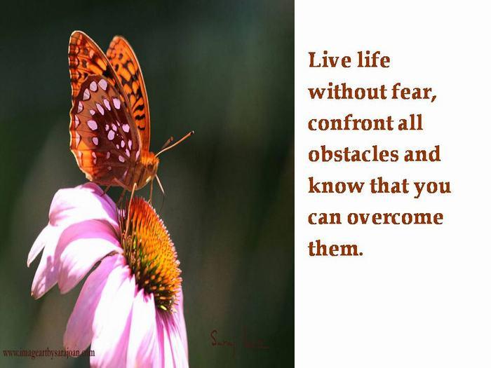 Shangrala's Butterfly's Story
