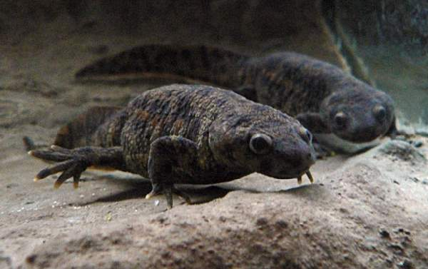 Shangrala's Dangerous Critters