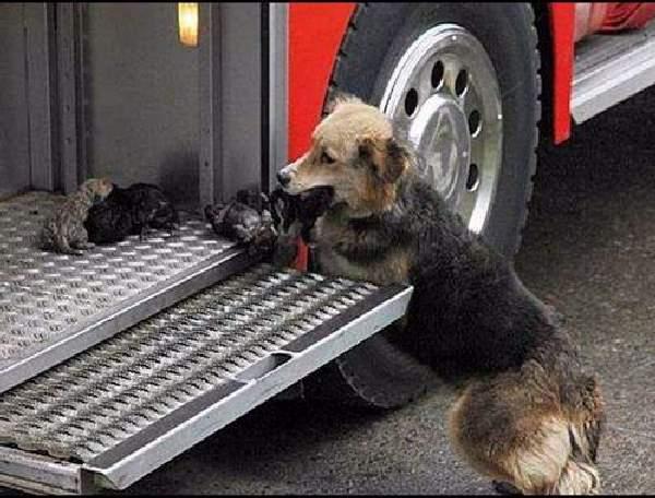 Shangrala's Dog Rescue Stories 2