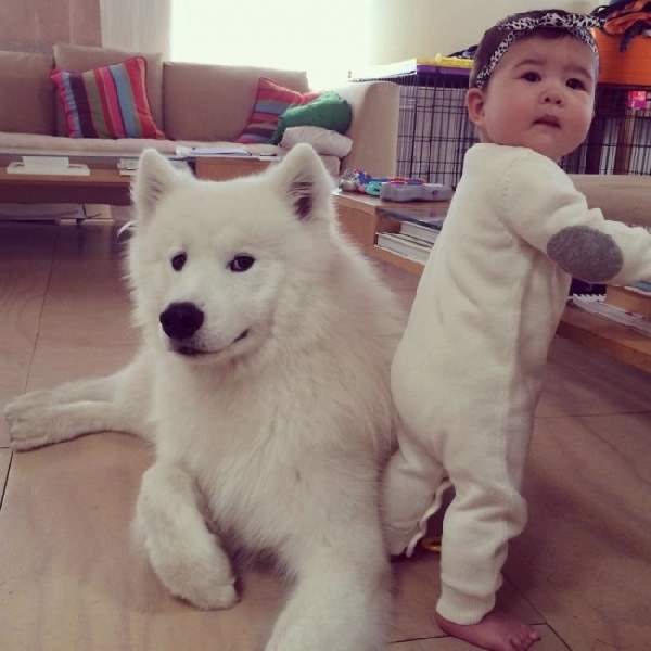 Shangrala's Dogs And Little Ones