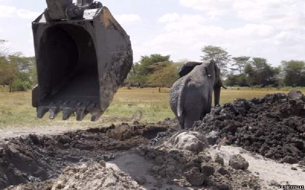 Shangrala's Elephant Rescue 3