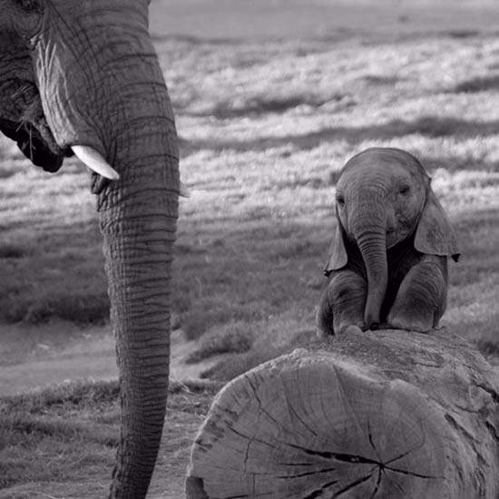 Shangrala's Adorable Baby Elephants