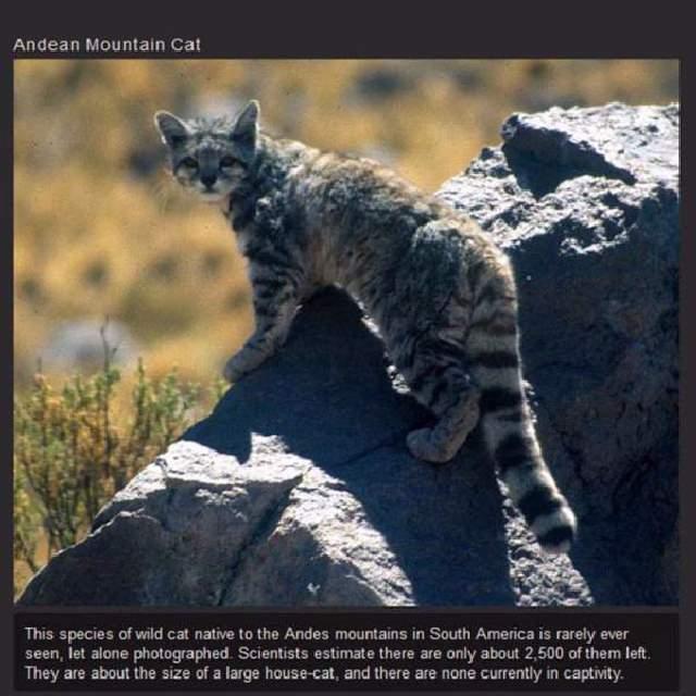 Shangrala's Rare Exotic Cats