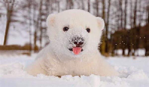 Animals First Snow