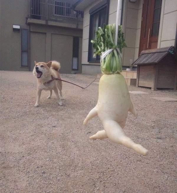Shangrala's Silly Veggies