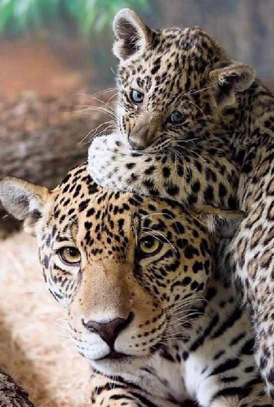 Shangrala's Animal Moms 5