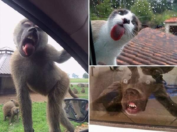 Shangrala's Animals And Windows