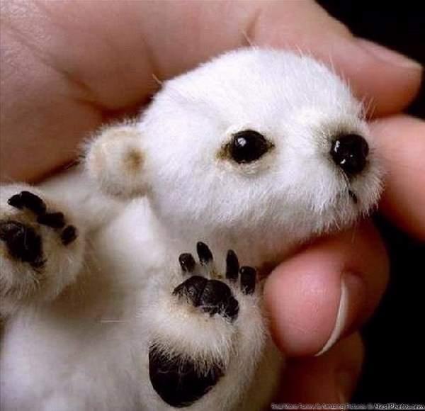 Shangrala's Hand-Sized Baby Animals