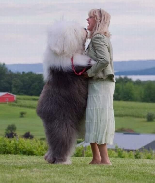 Shangrala's Big Baby Big Dogs 2